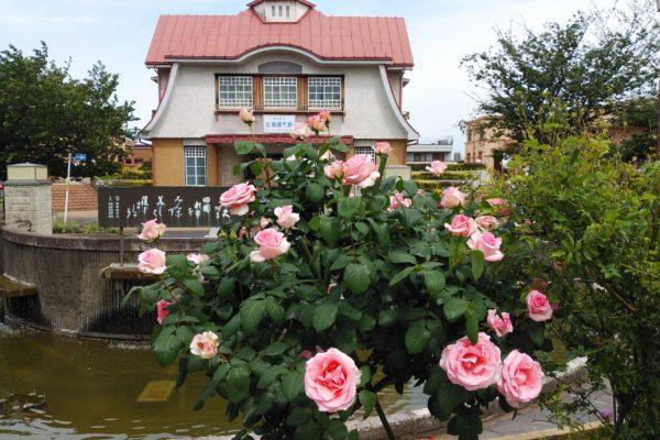 薔薇の美しい季節、到来!